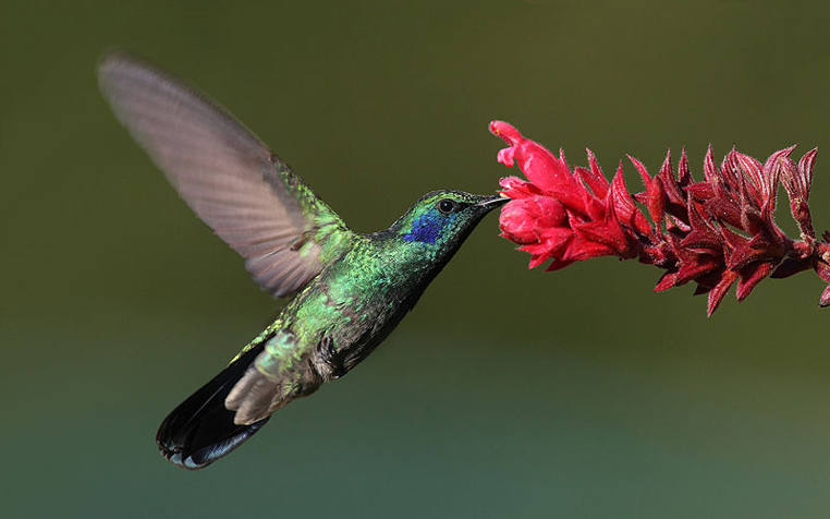 Will Google Hummingbird (new Algorithm) affect SEO ?
